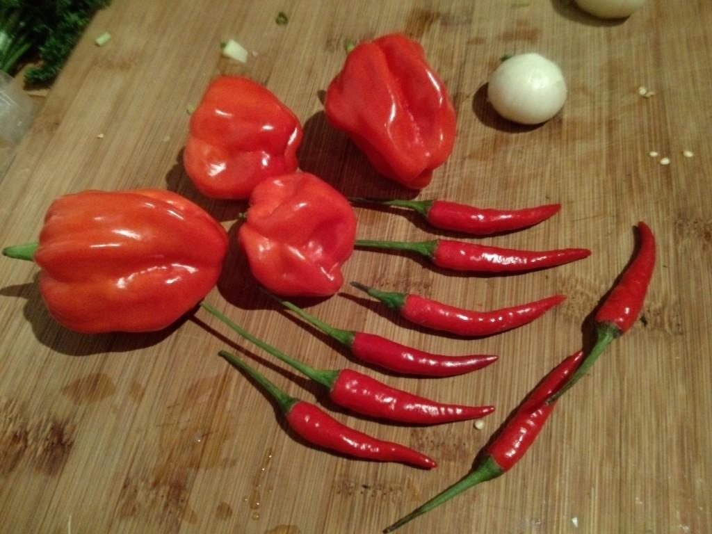 4 Habaneros und 8 kleine rote Chili
